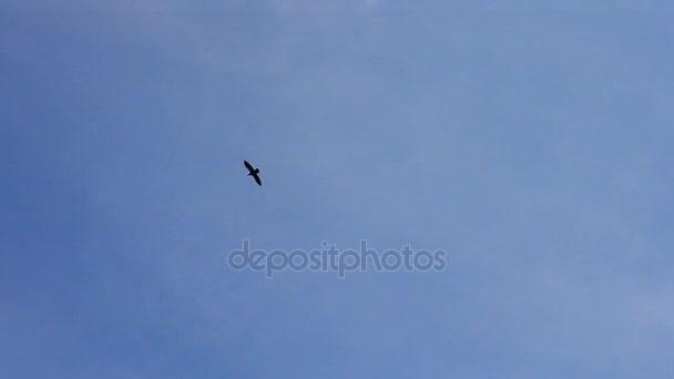 Pták, prudce proti modrou oblohu a bílé mraky