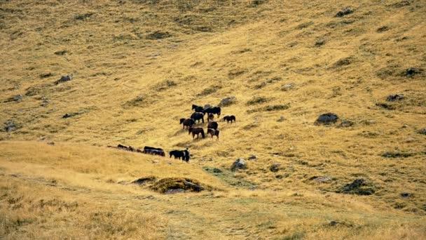 Stádo koní s pastevec a psa na pastvině