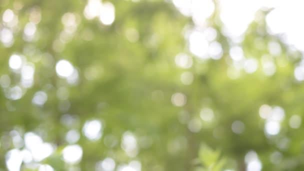 Přirozené světlo částice zelené pohybu pozadí