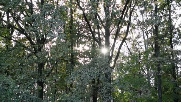 Slunce svítí skrz listoví v listnatý les