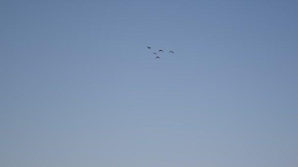 Vögel, offenbar Enten, fliegen in symmetrischer V-Formation am Himmel
