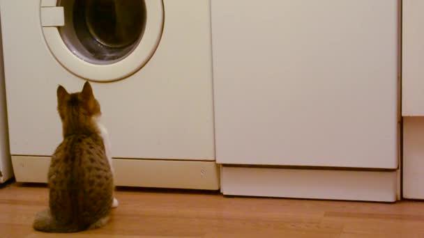 junge graue und weiße Katzenuhren funktionierende weiße Waschmaschine