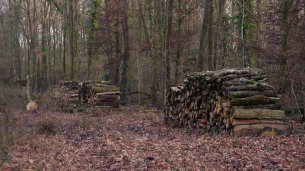 Stacks of firewood in forest