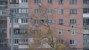 Elektrischen Leitungen für die Outdoor-Verkabelung auf der Straße ...