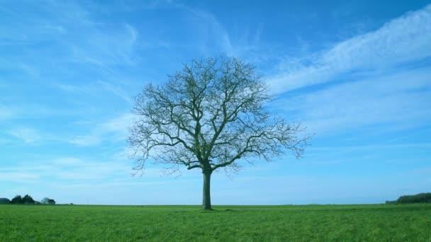 Jeden Bezlistý strom v zelené oblasti na pozadí modré oblohy