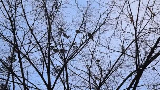 Birds fly from leafless tree