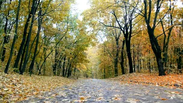 Hulló levelek őszi parkban üres sikátor