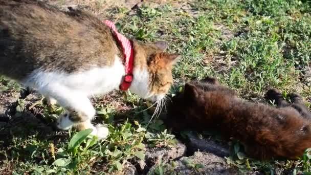 Szürke és fehér macska megközelítések egy másik kis fiatal fekete macska