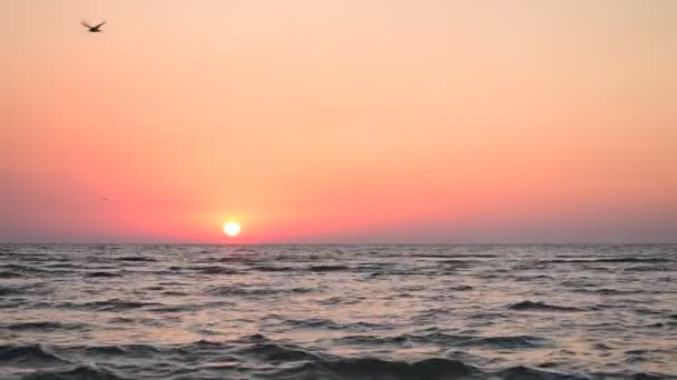 Ptáci létají nad vodou za úsvitu při východu slunce nad mořem