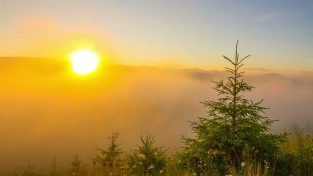 Misty ráno v horách s mladé jedle v popředí a mlha s mraky na pozadí. Timelapse