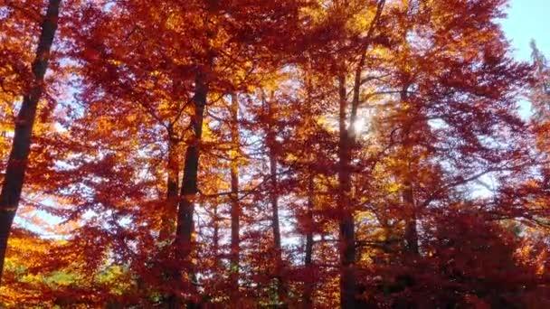 herbstliche Naturlandschaft, Waldspaziergänge mit Sonnenstrahlen.