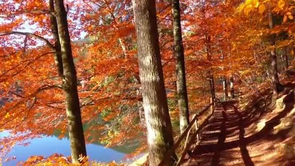 Podzimní příroda krajina, chůze na břehu jezera lesa