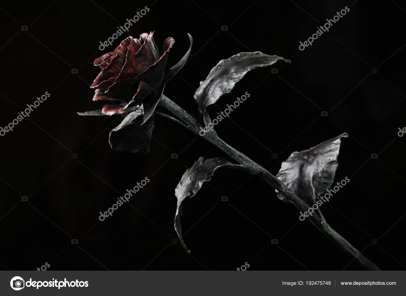 The Rose In Light On The Dark Background Stock Photo C Dymov D 192475748