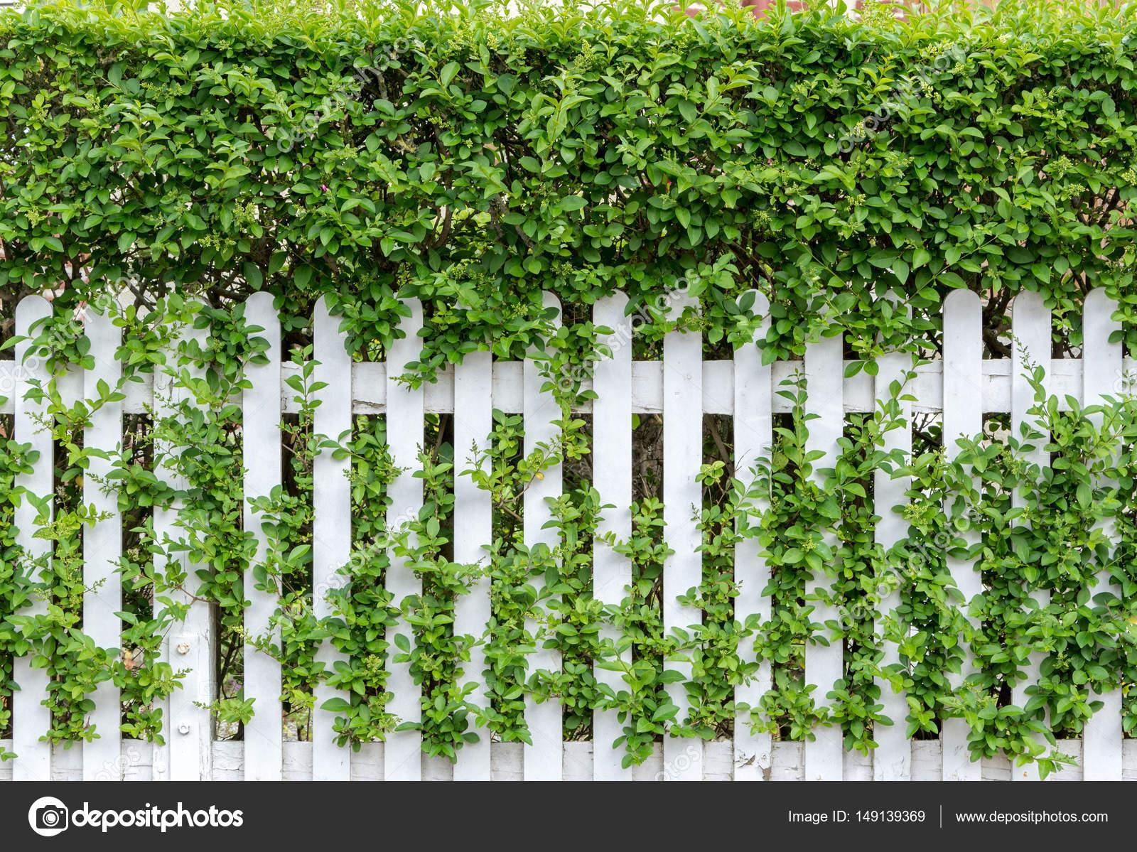 Frühlingsgrün Gras und Blatt Anlage über Holzzaun Hintergrund