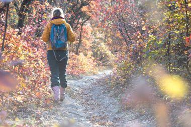 Hiker walking on autumnal Forest