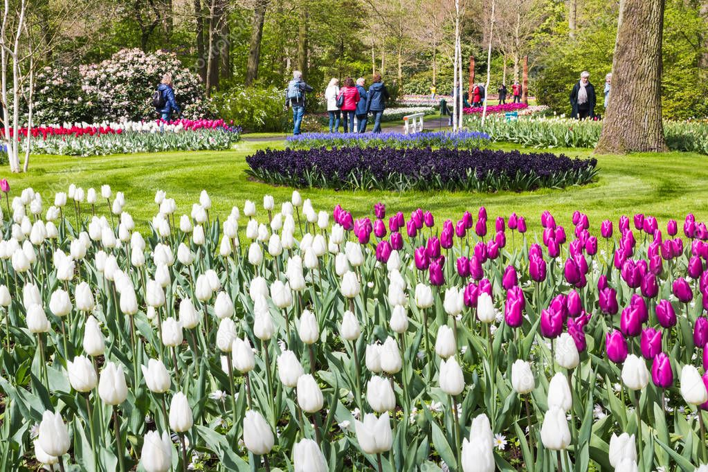 Park of flowers Keukenhof and people in it