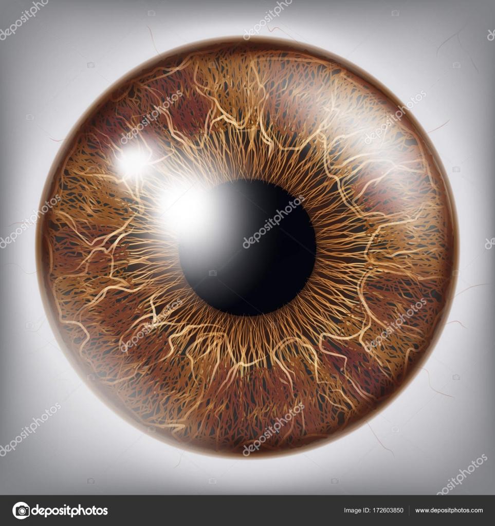 Vector de la Iris del ojo humano. 3D ilustración realista del globo ...