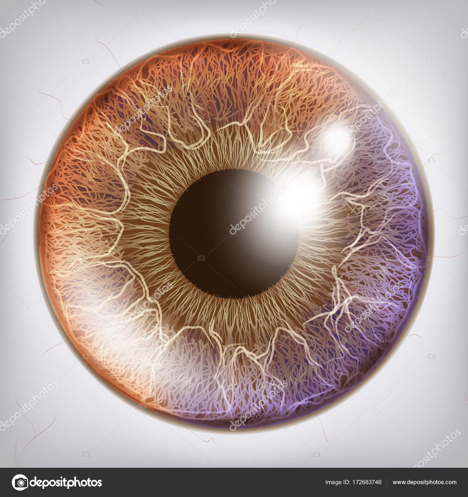 Auge Iris realistische Vektor. Anatomie Concept Illustration ...