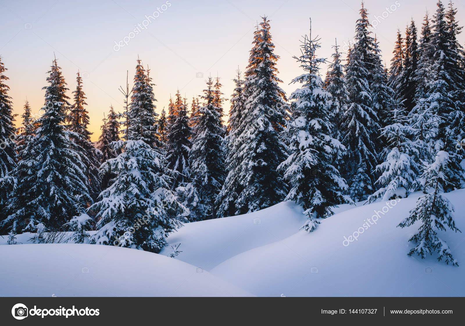 depositphotos_144107327-stock-photo-magic-winter-forest-covered-by.jpg