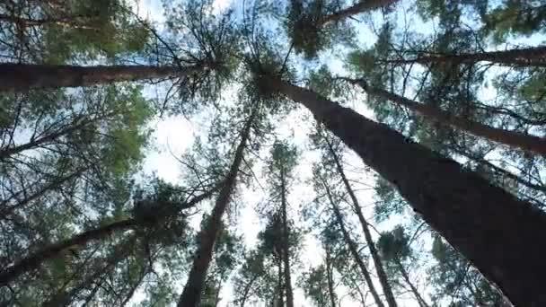 Corona albero verde, campata fotocamera