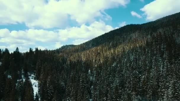 Karpaten im Winter in einem Kiefernwald bedeckt. 4K-Luftbild.
