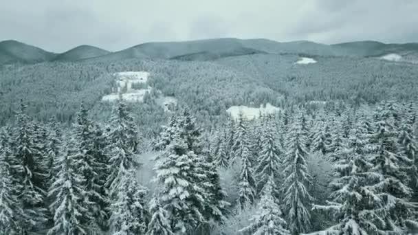 Vorwärts Antenne zu verschneiten Tal mit Wäldern Wald am Sella Pass.Sonnenuntergang oder Sonnenaufgang, wolkenverhangener Himmel.Winter Dolomiten Italienische Alpen Berge Outdoor-Natur-Betriebe. 4k Drohnenflug