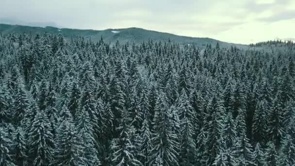 Letecký pohled na zamrzlý les se zasněženými stromy v zimě. Let nad zimním lesem ve Finsku, výhled shora.