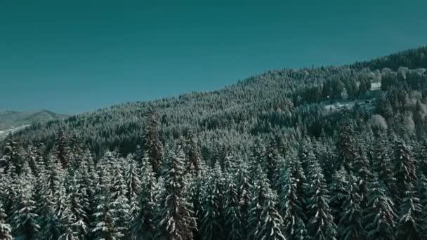 Luftaufnahme eines gefrorenen Waldes mit schneebedeckten Bäumen im Winter. Flug über den Winterwald in Finnland, von oben.
