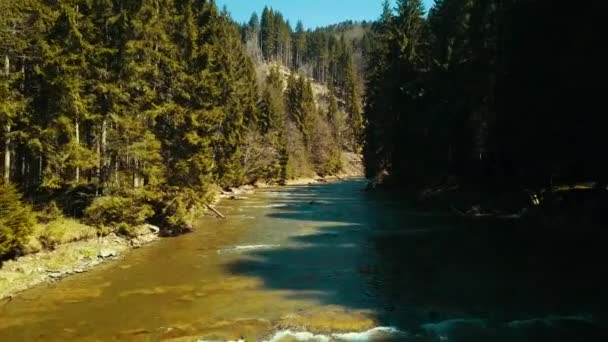 Mountain pine river flight over drone river soars above mountain water