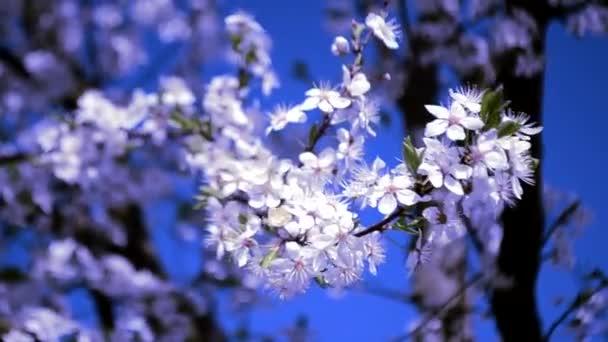 fleur exterieur printemps
