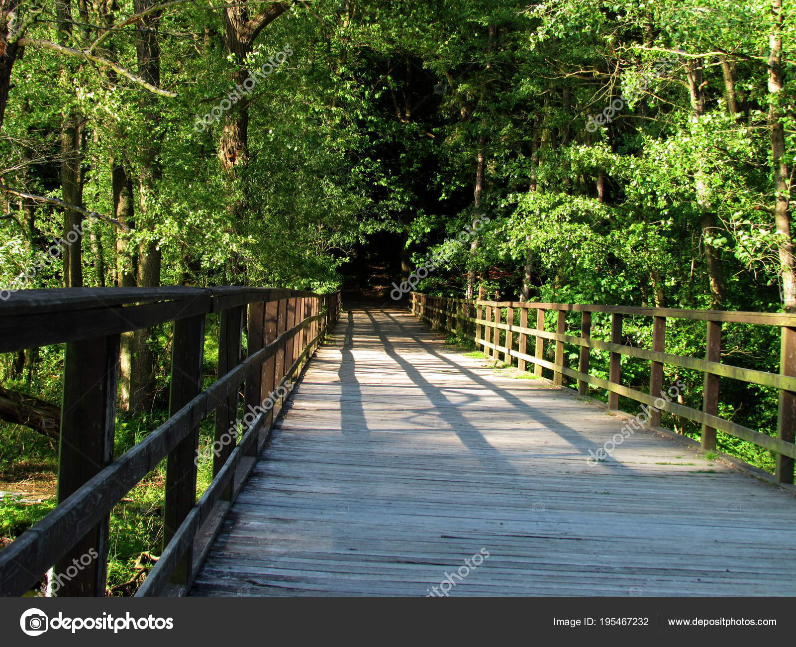 wooden footbridge over a stream wooded landscape stock photo