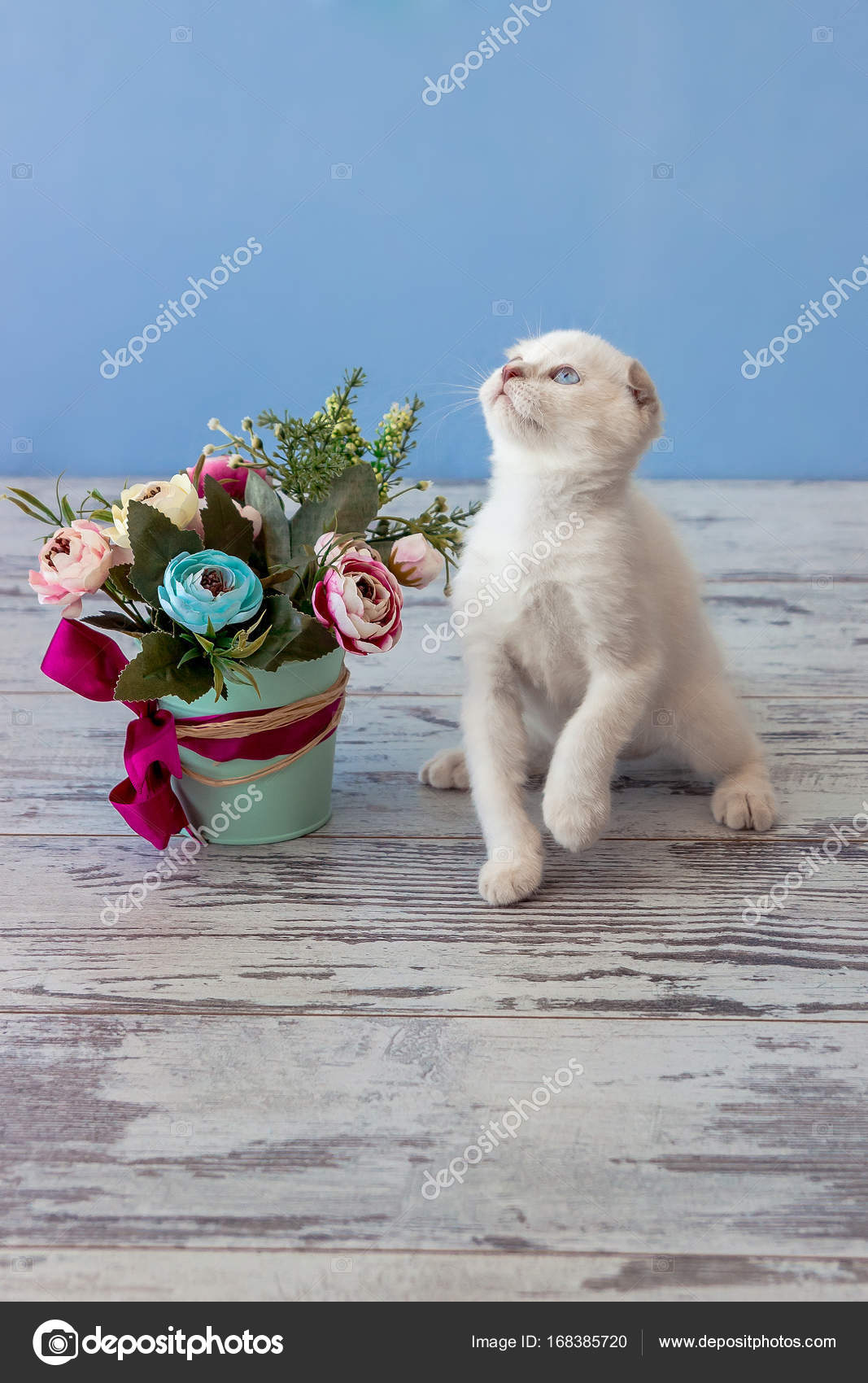 kitten of Scottish fold breed with flower bouquet — Stock Photo ...