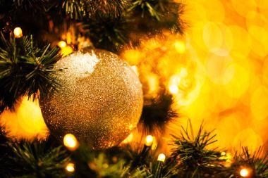Fir branch with festive lights