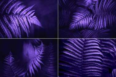 Set of beautiful fern leaves green foliage natural floral fern background. Ultra Violet creative and moody color of the picture.