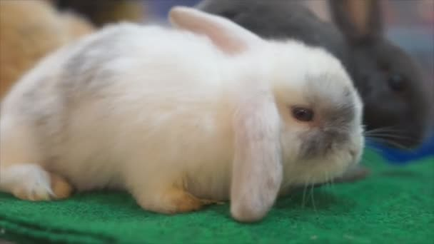 Rabbit looking camera in store,