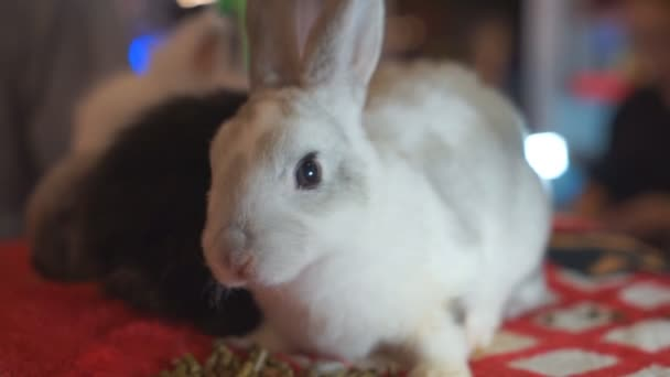 Kaninchen Hase Baby HD-Filmmaterial
