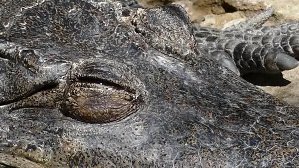 Zavřený krokodýla oka kdy otevřít oči