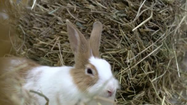 The rabbit sat beside the hay