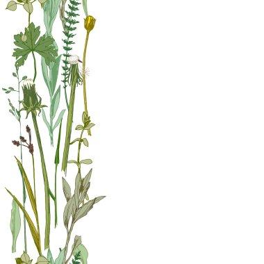 seamless herbal border