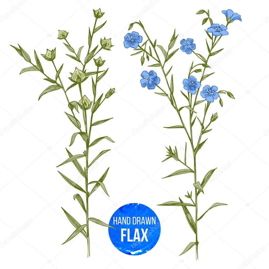 Hand drawn colorful flax flowers and seeds