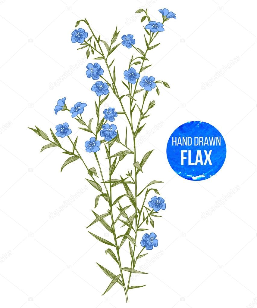 Hand drawn colorful flax flowers