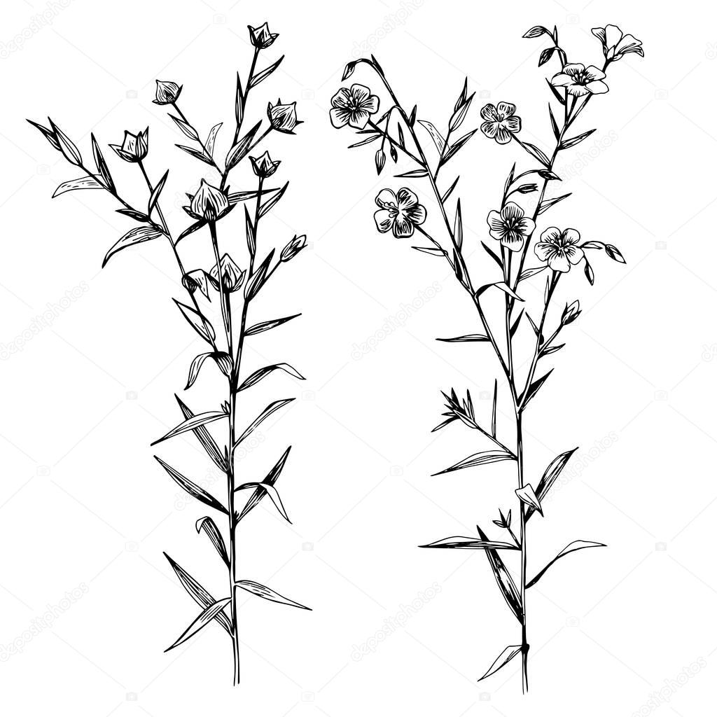 Hand drawn flax flowers and seeds