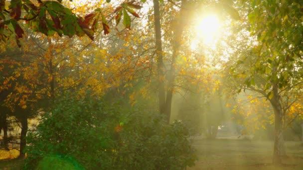 őszi park reggel