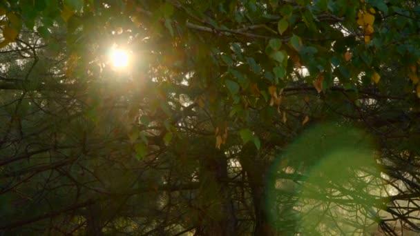 Paprsky slunečního světla přes podzimní listy.