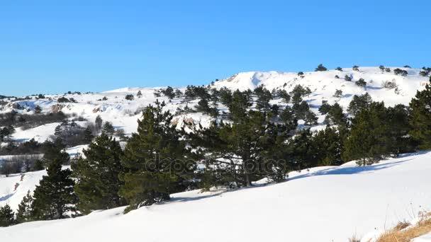 Borovicový les v sněhem pokrytá plošina