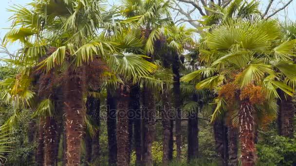 Palmový háj palem
