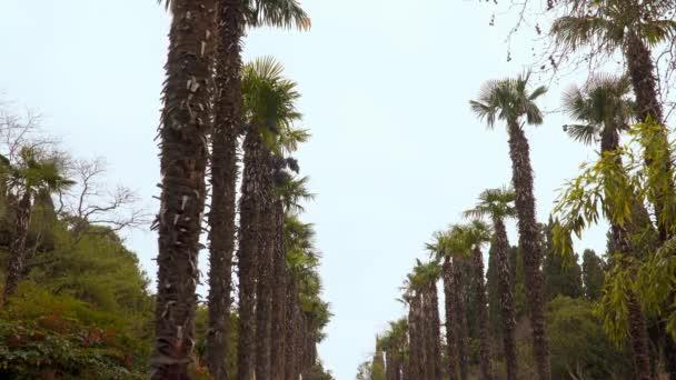 Palmové stromy podél avenue