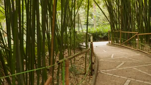 Oplocený silnici přes bambusový háj