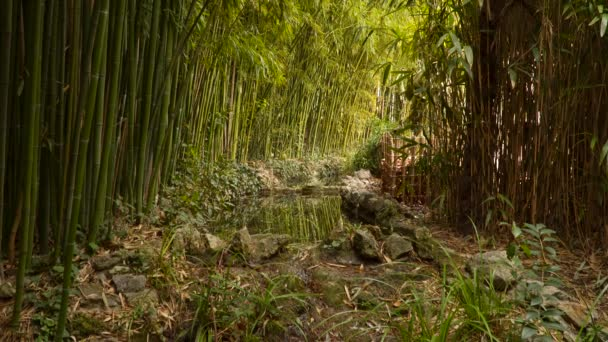 Stream in the bamboo forest