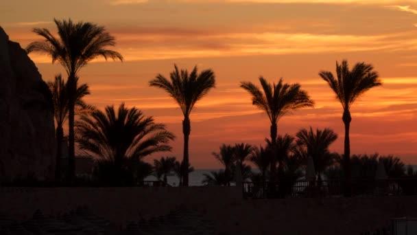 Pálmafák a strandon, szemben az ég, Hajnal előtt